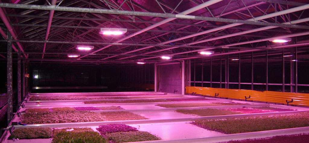 Warum LED Grow - LED Grow Shop